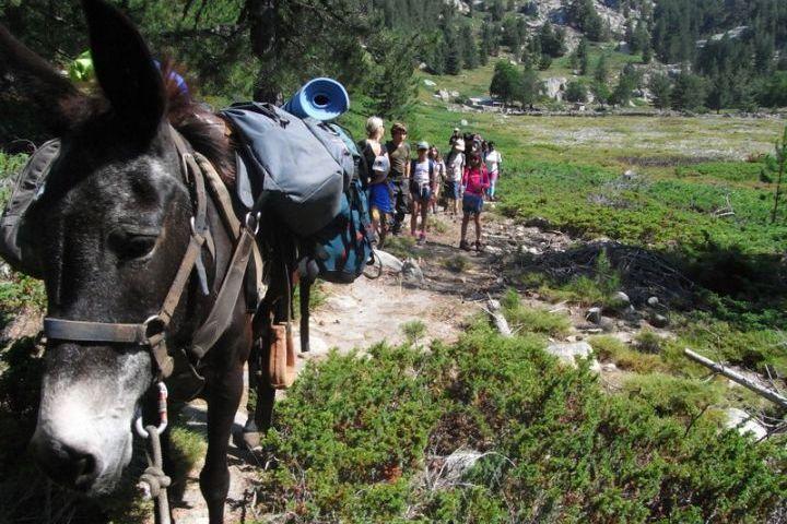 rando-mules